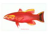 Hawaiian Fish, Uu Art