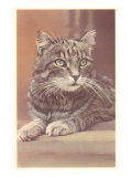 Tabby Cat Posters