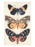 Three Butterflies Posters