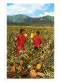 Children in Pineapple Field, Hawaii Posters