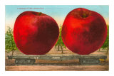 Giant Apples on Flatbed Prints