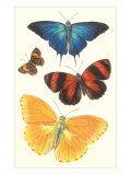 Varieties of Butterfly Posters