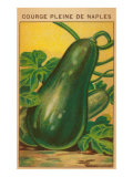 French Zucchini Seed Packet Posters