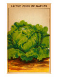 French Cabbage Seed Packet Poster