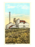 Sugar Cane Processing Mill Posters