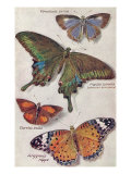 Varieties of Butterfly Prints