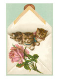 Kittens in Envelope with Rose Prints