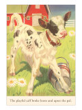 Calf with Pail Poster