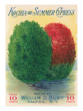 Summer Cypress Seed Packet Posters