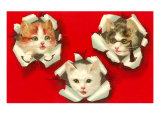 Three Kittens Poking out of Paper Posters
