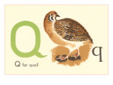 Q is for Quail Reproduction procédé giclée