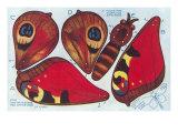 Cutout Moth Puppet Print