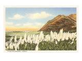 Fleurs de canne, Hawaii Affiches
