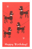 Happy Birthday, Four Poodles on Leashes Prints