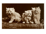 Sepia Photograph of Kittens Poster