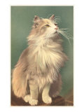 Fluffy Cat Poster