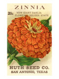 Zinnia Seed Packet Art