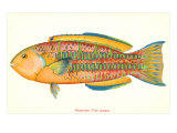 Hawaiian Fish, Awela Prints