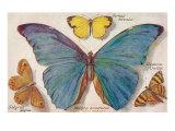 Varieties of Butterfly Art