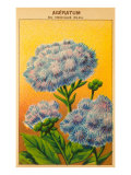 French Ageratum Seed Packet Posters