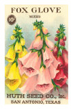 Fox Glove Seed Packet Affiches