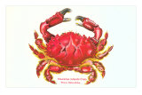 Hawaiian Crab Photo