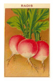 French Radish Seed Packet Posters
