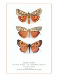 Exotic Moths Prints