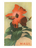 Maui, Hibiscus Blossom Prints