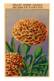 French Carnation of India Seed Packet Posters