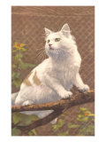 Cat on Branch Poster