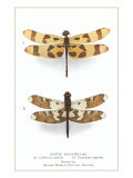 Exotic Dragonflies Posters