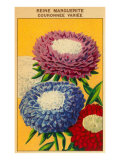 French Reine Marguerite Coronets Seed Packet Art