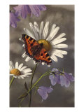 Butterfly on Daisy Prints