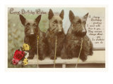 Loving Birthday Wishes, Three Scottie Dogs Poster