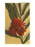 Torch Ginger Flower, Hawaii Posters