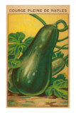 French Zucchini Seed Packet Print