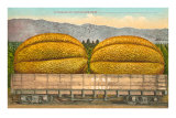 Giant Cantaloupe in Rail Car Prints