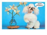 Happy Birthday Poodle Posters
