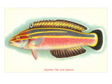 Hawaiian Fish, Julis Eydouxi Poster