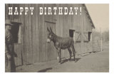 Happy Birthday, Mule and Man Prints