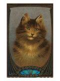 Coy Cat Poster