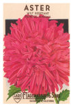 Aster Seed Packet Affiches