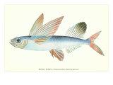 Hawaiian Fish, Malolo Puhiki'i Prints