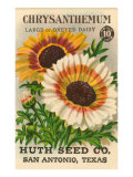 Chrysanthemum Seed Packet Prints