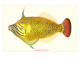 Hawaiian Fish, Oili Poster