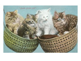 Double Basket Full, Four Kittens Prints