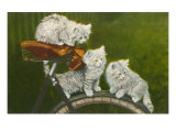 Three Kittens on Bicycle Posters