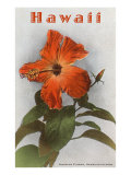 Hawaii, Hibiscus Flower Prints