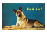 Thank You Quizzical German Shepherd Print